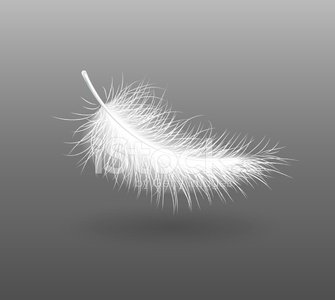 feather falling light small white swan Clipart Image.
