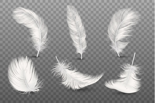 Vector Realistic Feathers.