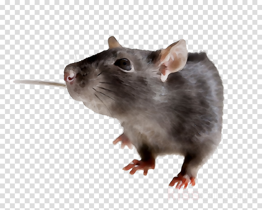 Hamster Background clipart.