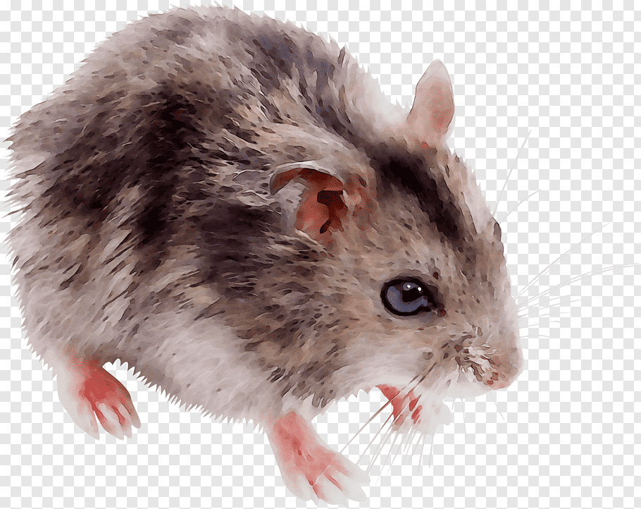 Hamster, Gerbil, Biology, Whiskers, Cell, Mouse, Bacterial.