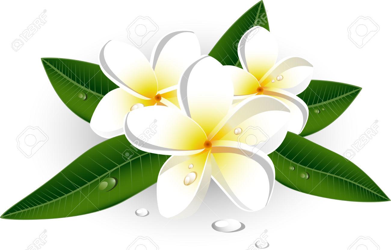 Frangipani Flower Clipart.