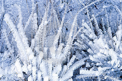 Winter Background With Natural White Frost And Ice Stock Images.