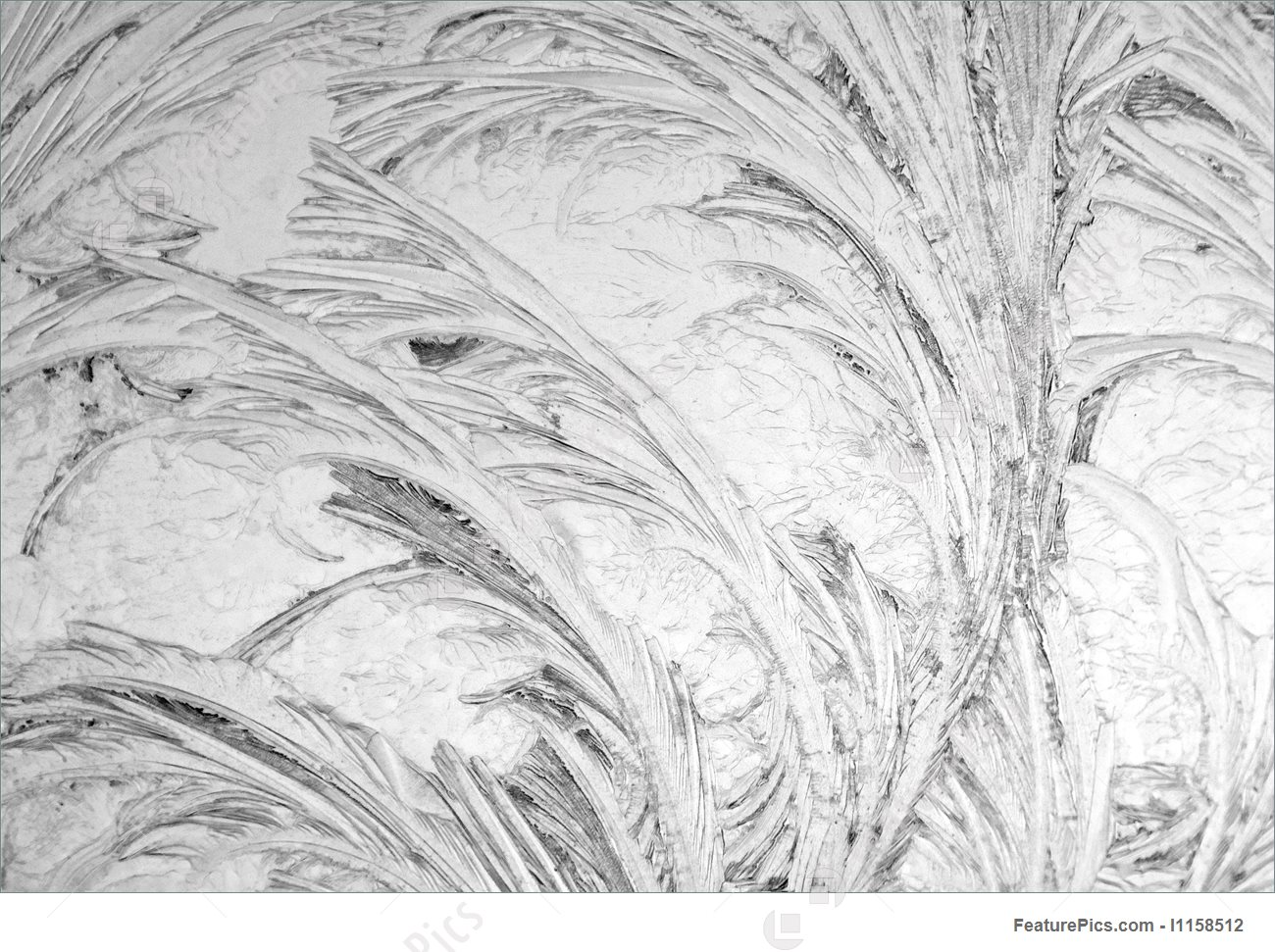 Black And White Frost Picture.