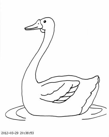 Duck Swimming Clipart Black And White.