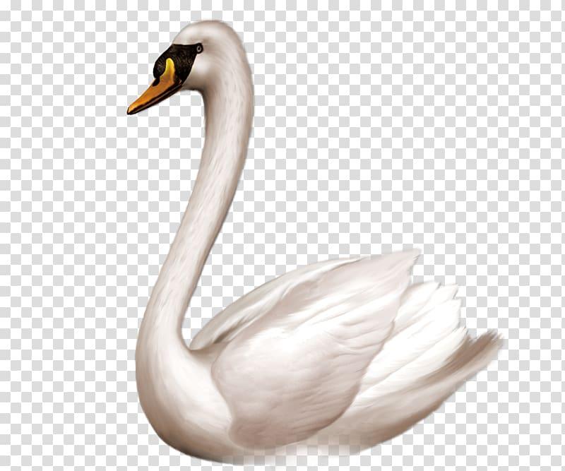 Swan goose Bird Domestic goose , White swan transparent.