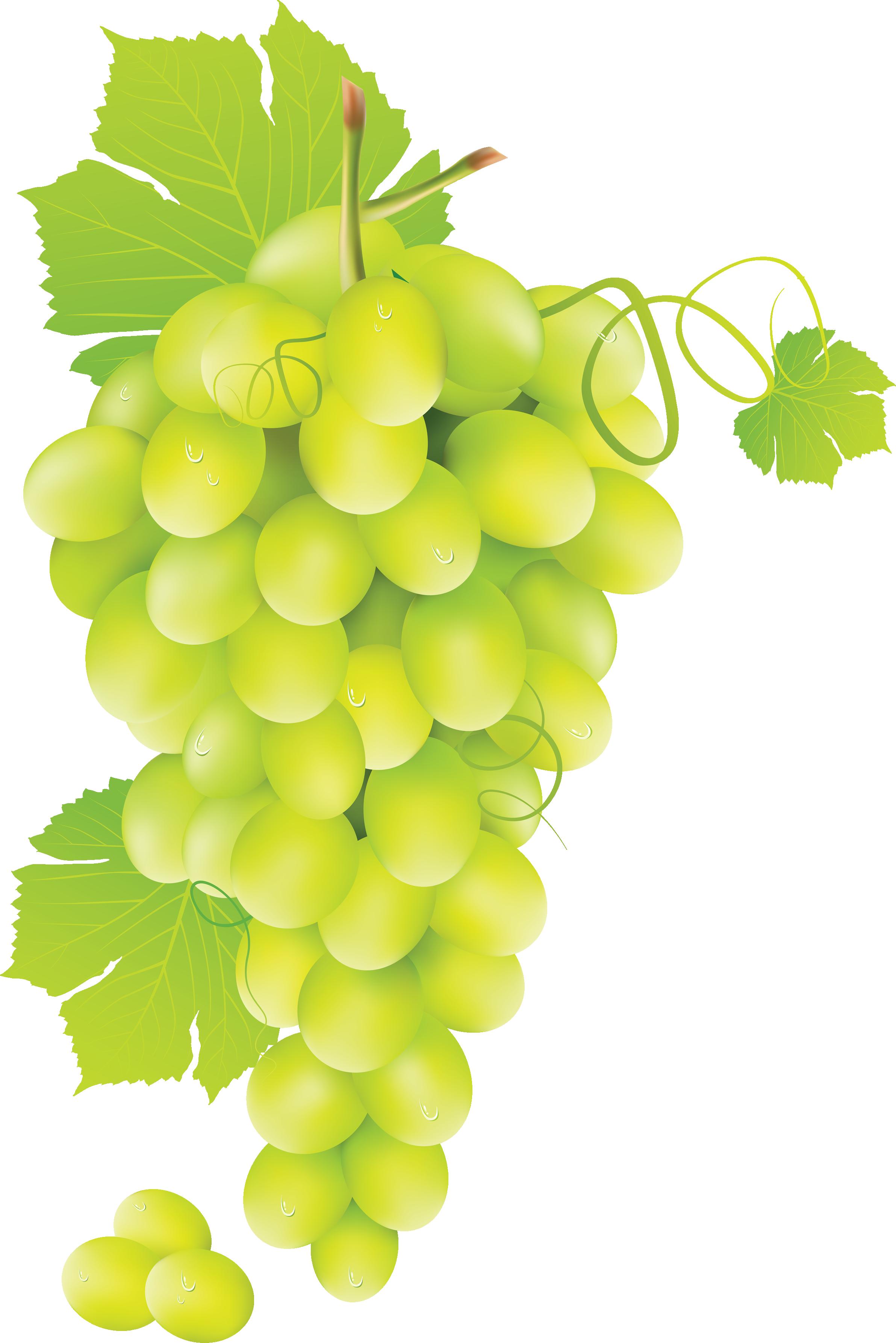 White grapes clipart.
