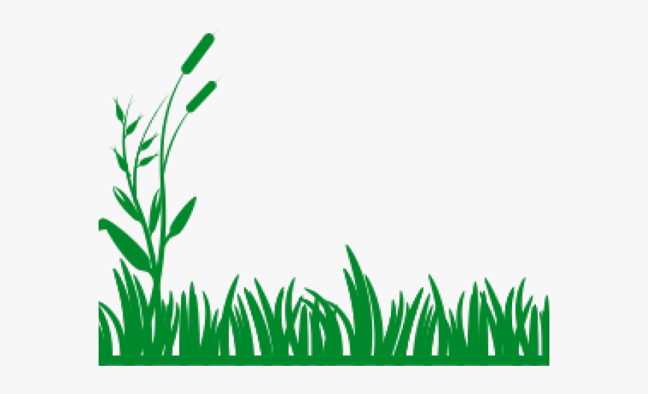 Reed Clipart Grassy.