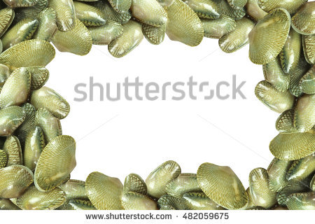 Venus Clam Stock Photos, Royalty.