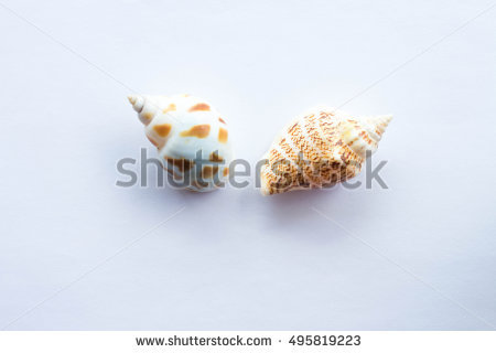 Venus Shell Stock Photos, Royalty.
