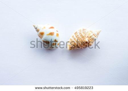 Venus Shell Stock Photos, Royalty.