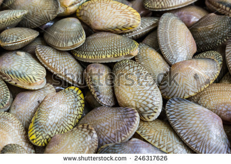Venus Clams Stock Photos, Royalty.
