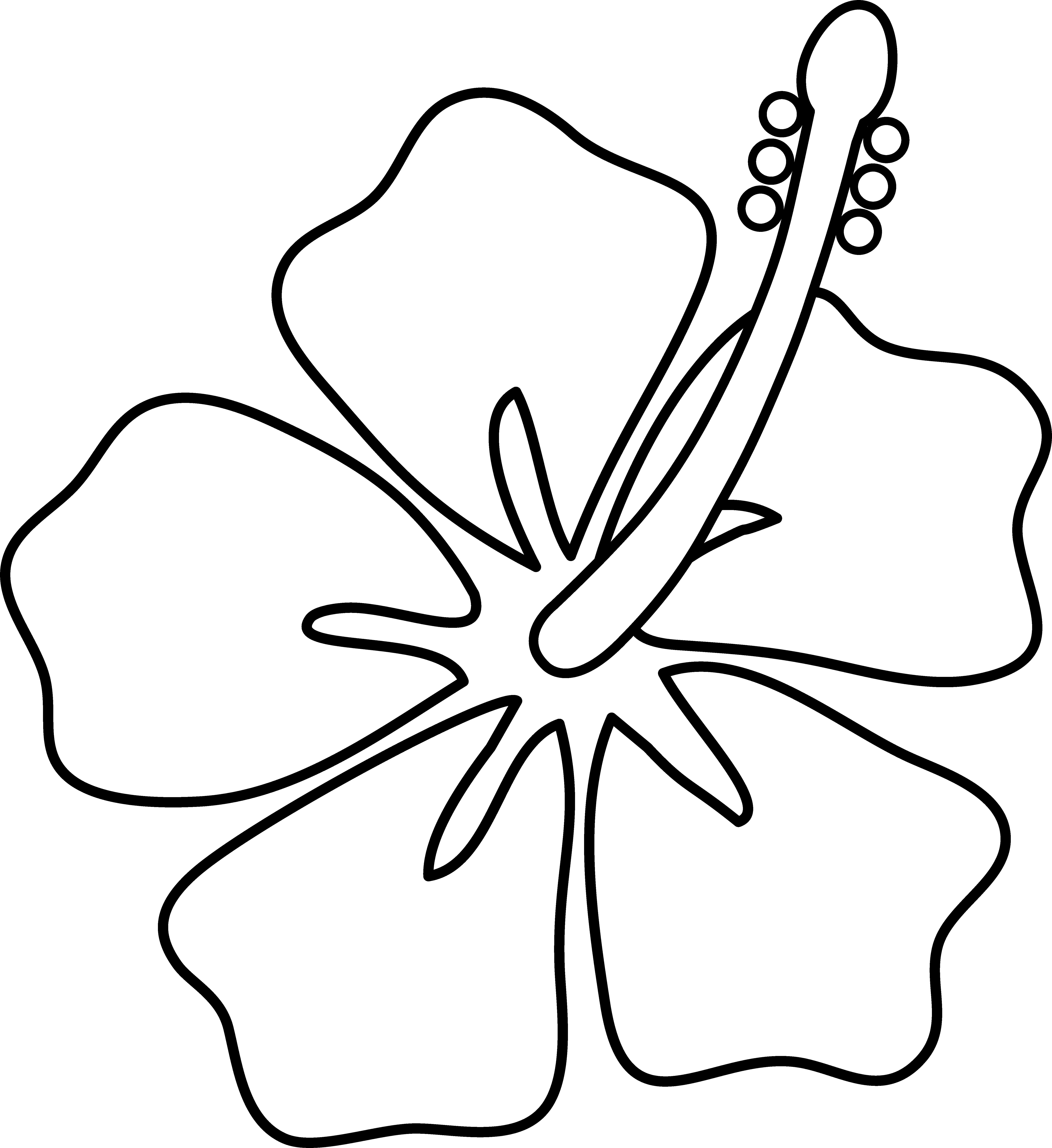 White Hibiscus Clip Art.