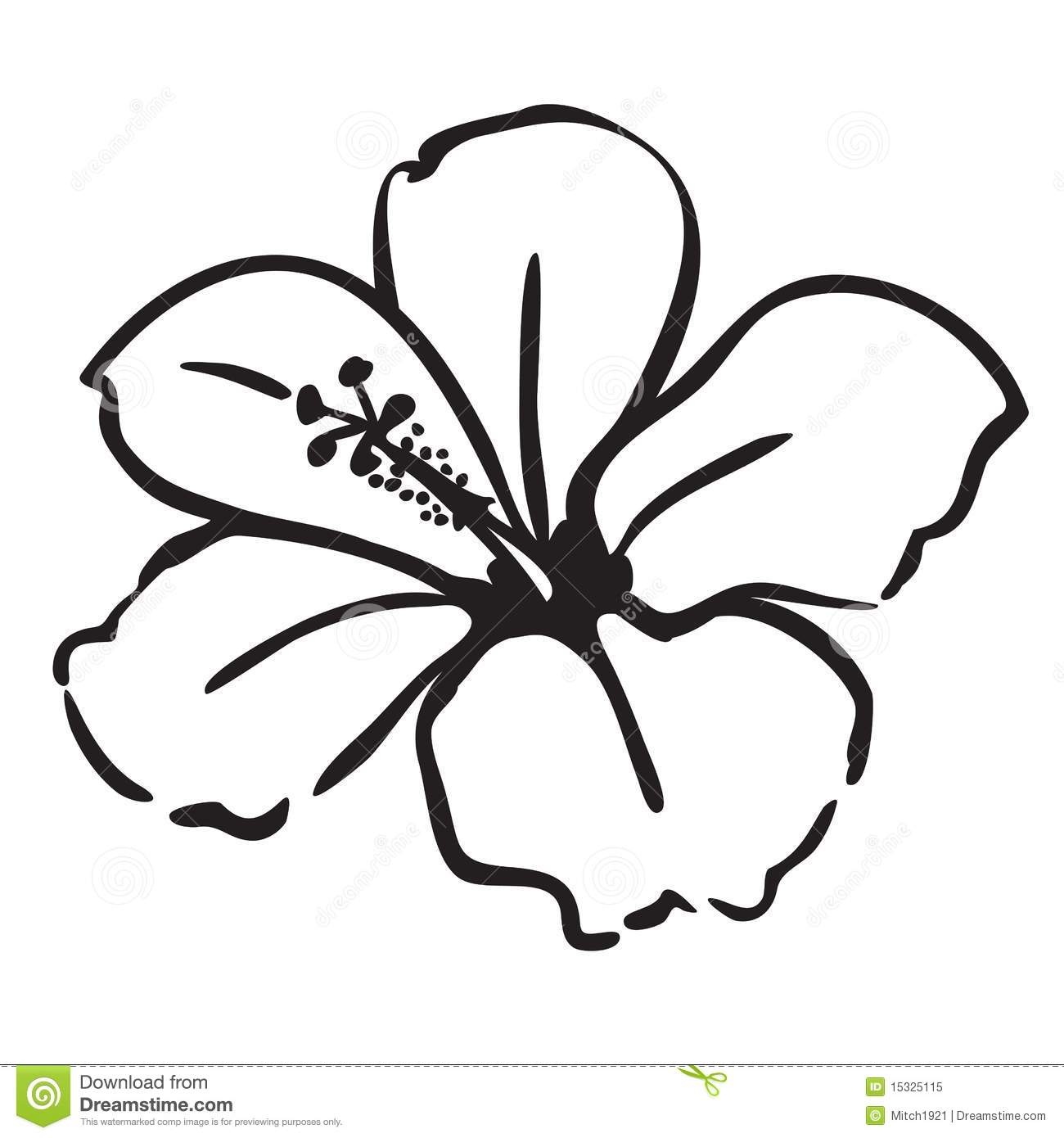 1000+ images about Flower drawings on Pinterest.