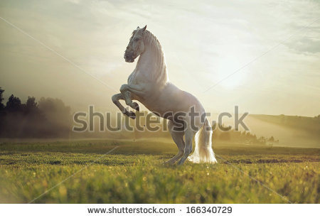 White Horse Stock Images, Royalty.
