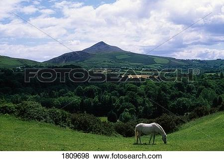 Pictures of White horse, Sugarloaf Mountain, Co Wicklow, Ireland.