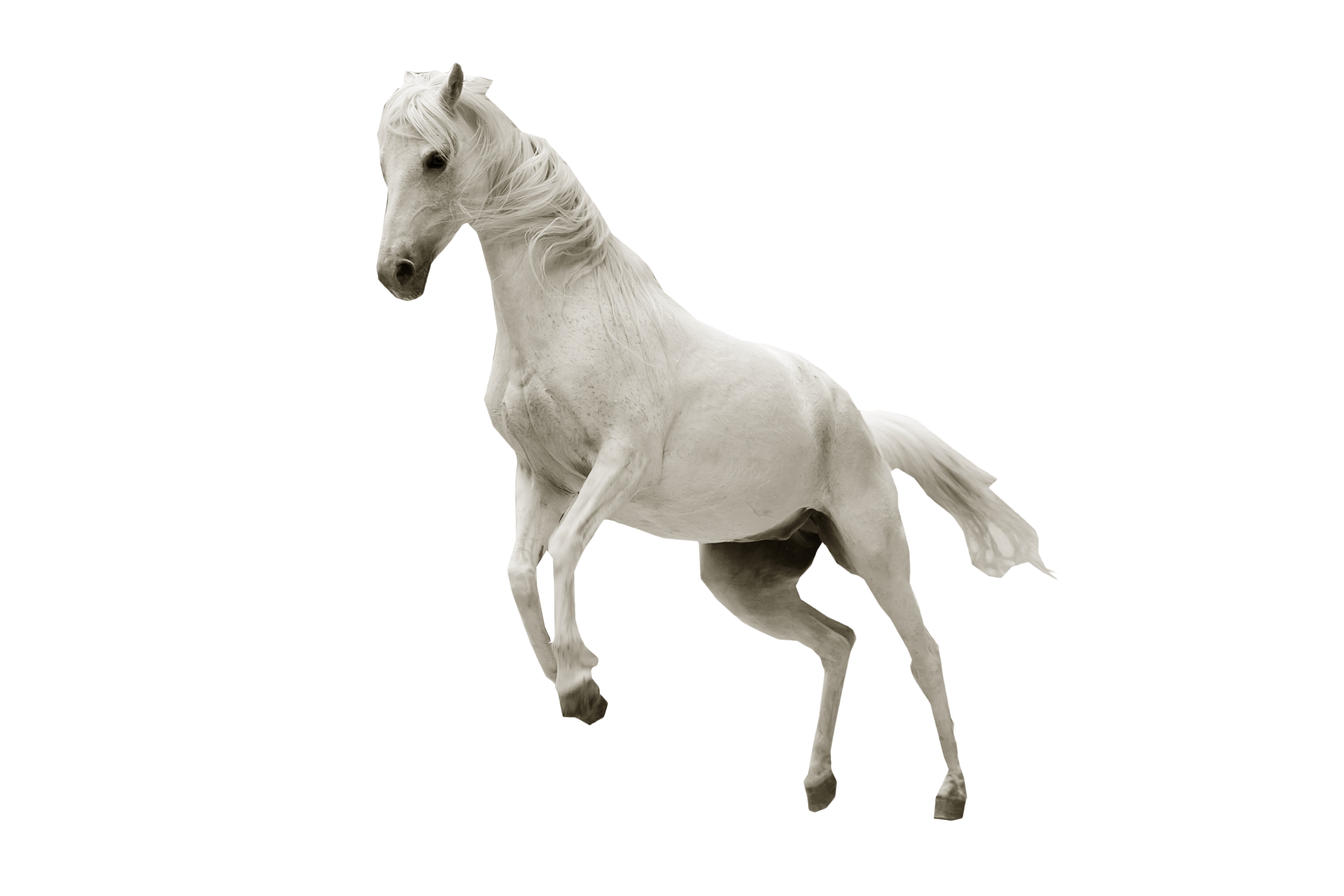 White Horse Jumping PNG Image.