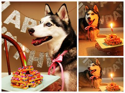 17 Best ideas about Happy Birthday Dog on Pinterest.