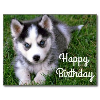 White Husky Happy Birthday Clipart 20 Free Cliparts