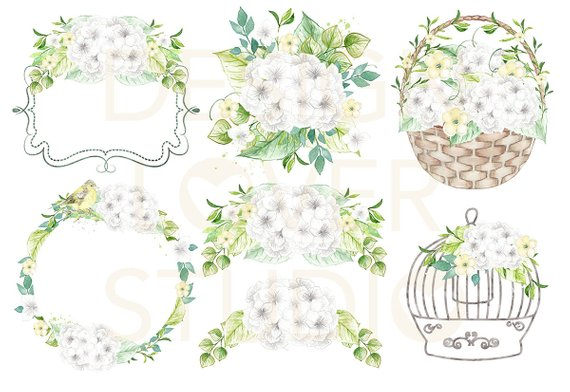 Watercolor White Hydrangeas design, spring watercolor flower.