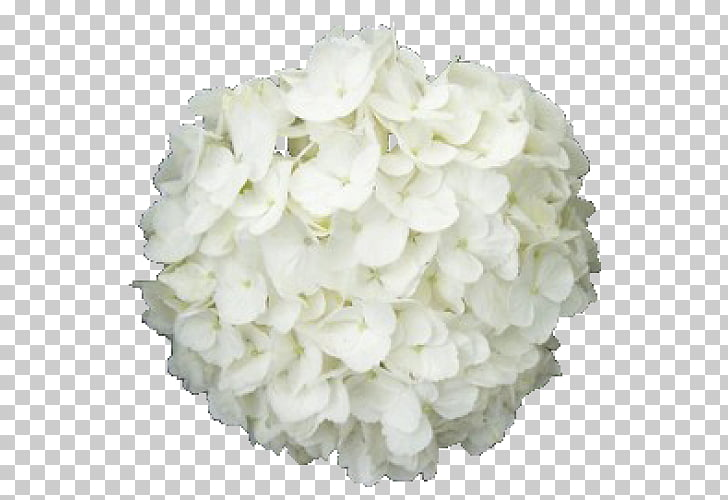 French hydrangea Cut flowers White Plant, flower PNG clipart.
