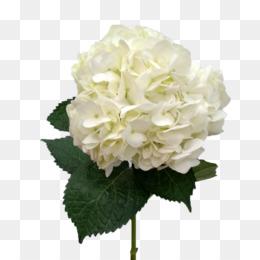 White Hydrangea PNG.