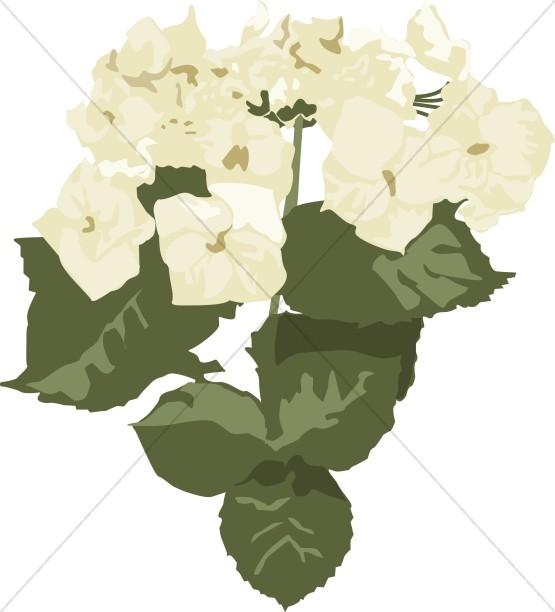 White Hydrangea Altar Flowers.