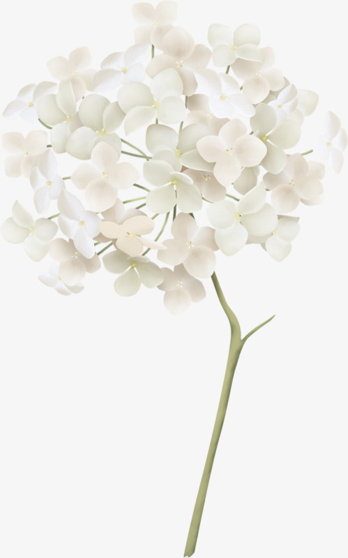 White Hydrangea, Float, White, Hydrangea PNG Transparent Image and.