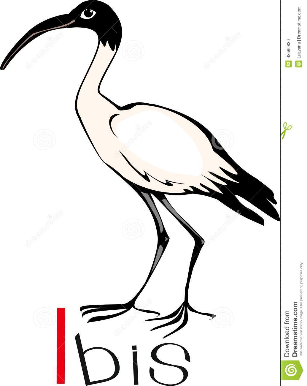 Ibis With Title Stock Vector.