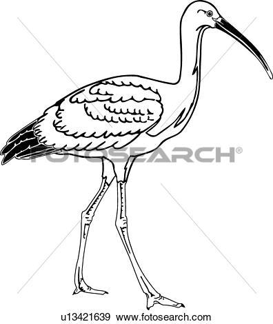 Clip Art of Ibis u13421639.