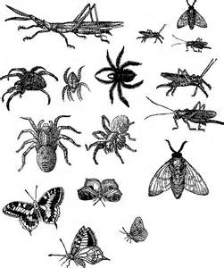 Insect Clipart Black And White Image bugs.