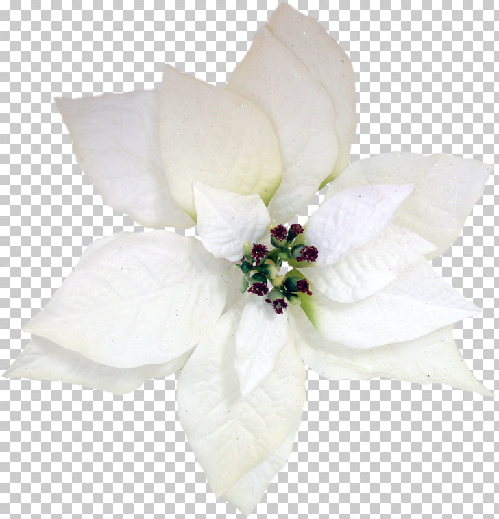 Flower Poinsettia Christmas Petal, anemone PNG clipart.