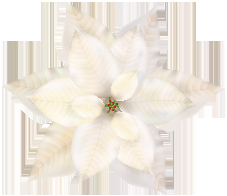 Christmas White Poinsettia PNG Clip Art.