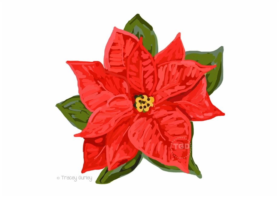 Free Poinsettia Transparent Background, Download Free Clip.