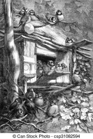 Stock Illustration of Aluri chickadees (Jura forest), vintage.