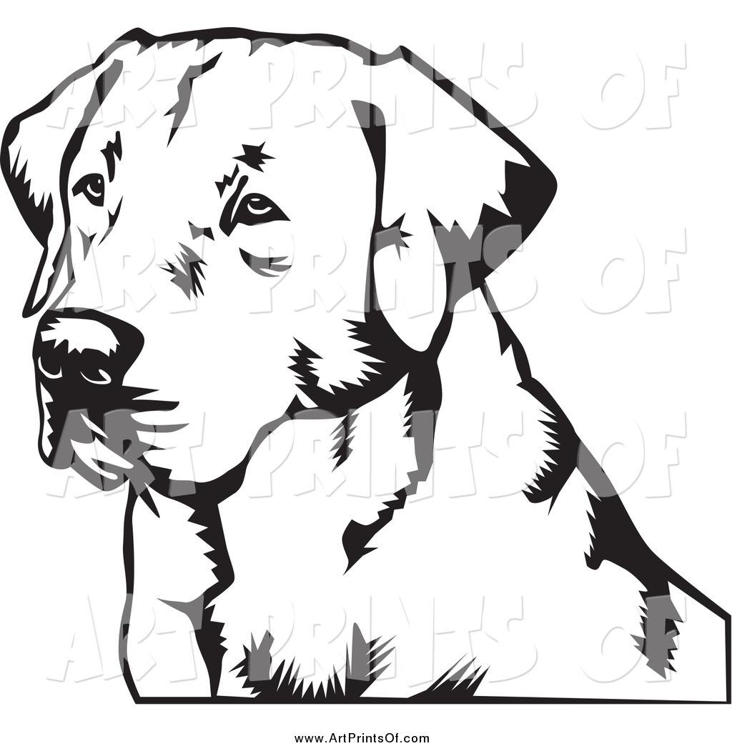 1263 Labrador free clipart.