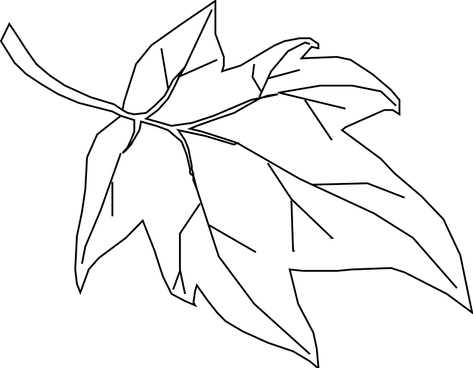 Free vector graphic maple leaf outline tree nature clipart.