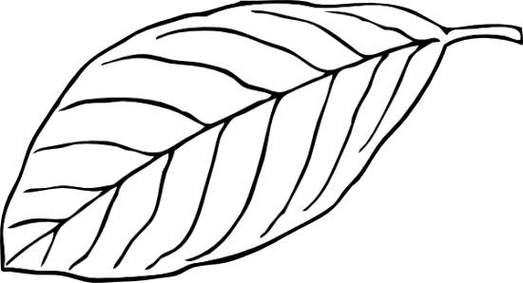 Clipart leaves black and white.