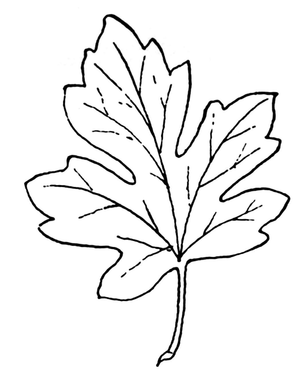 Black and white leaf clipart.
