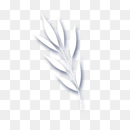 White Leaves PNG Images.