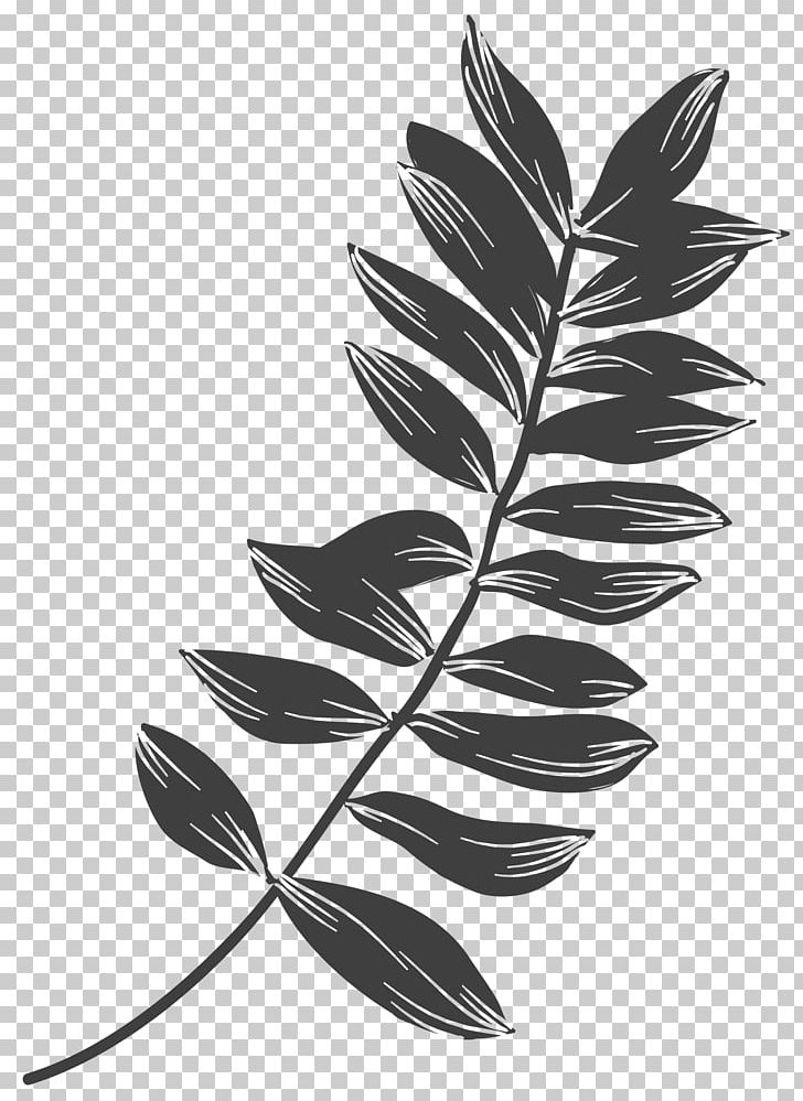Plant Leaves Leaf Black And White PNG, Clipart, Animation, Autumn.