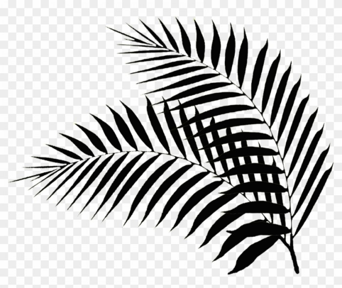 Palm Leaves Black And White Palm Leaf Png Free Transparent Png Palm.