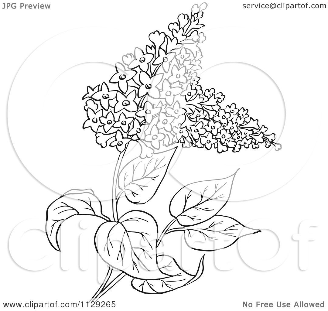 Cartoon Clipart Of An Outlined Lilac Flower Plant.