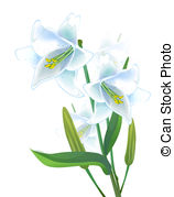 Lily Stock Illustrations. 14,471 Lily clip art images and royalty.