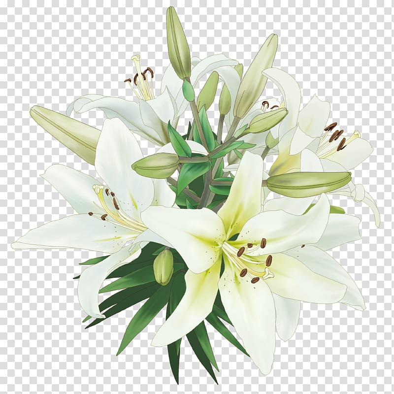 Flor , white lily flowers transparent background PNG clipart.