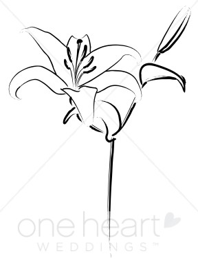 White Lily Clip Art.