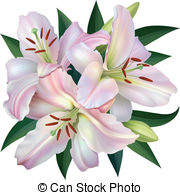 White lily Illustrations and Clipart. 6,469 White lily royalty.