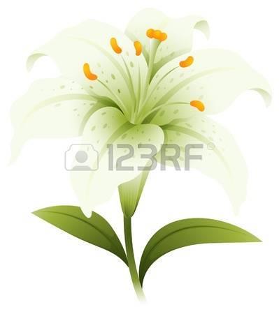 24,628 Lily Flower Cliparts, Stock Vector And Royalty Free Lily.