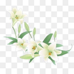 Lily, Flowers, White, Lily PNG Image And #34617.