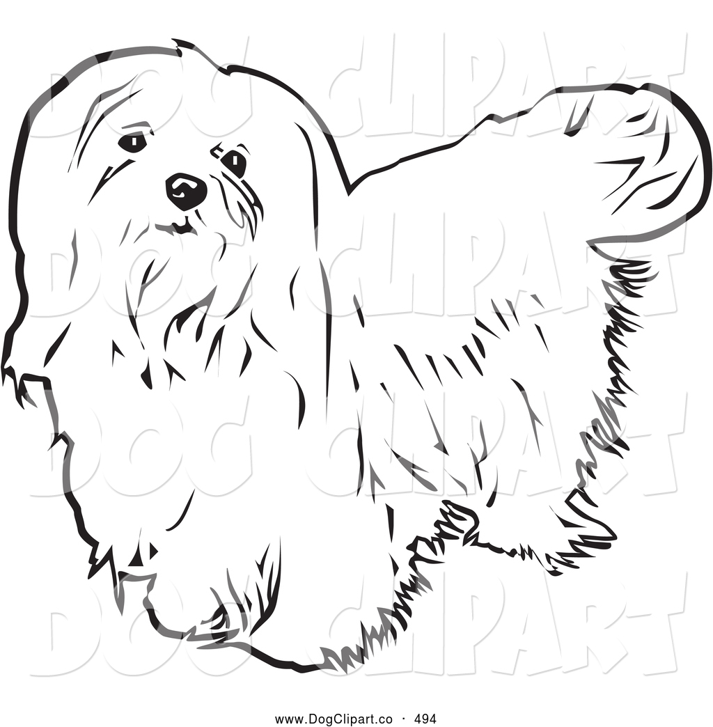 Vector Clip Art of a Cute Long Haired Maltese Dog Looking.