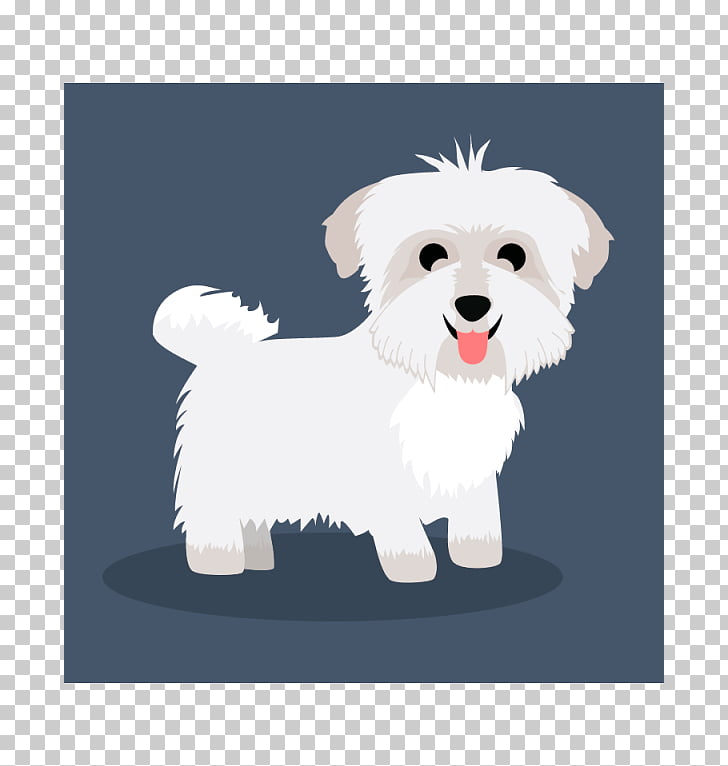 Maltese dog Havanese dog West Highland White Terrier Puppy.